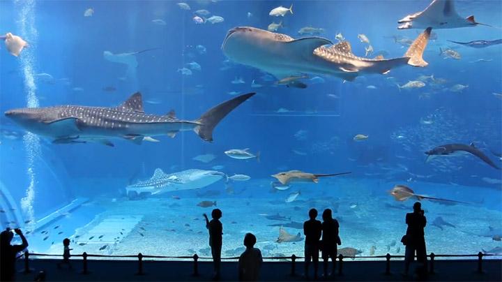 vidrios para acuarios y piscinas